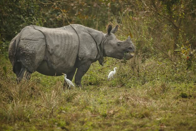 kaziranga national ark