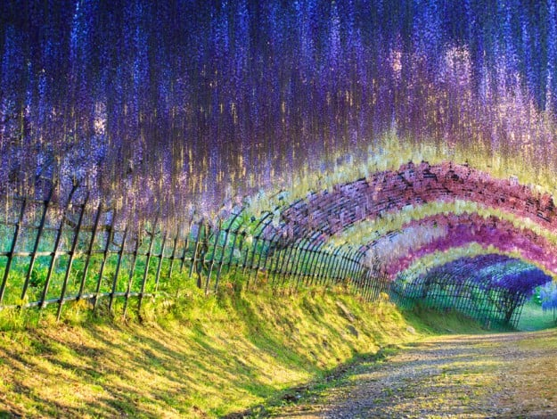 25 incredible places on earth that look too good to be Wisteria flower tunnel path in japan