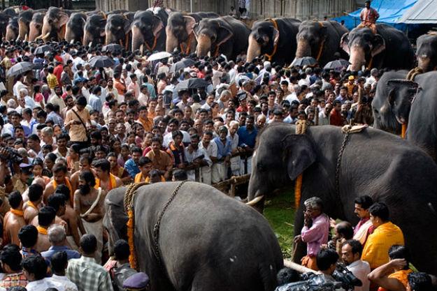 Photograph: Kerala Tourism
