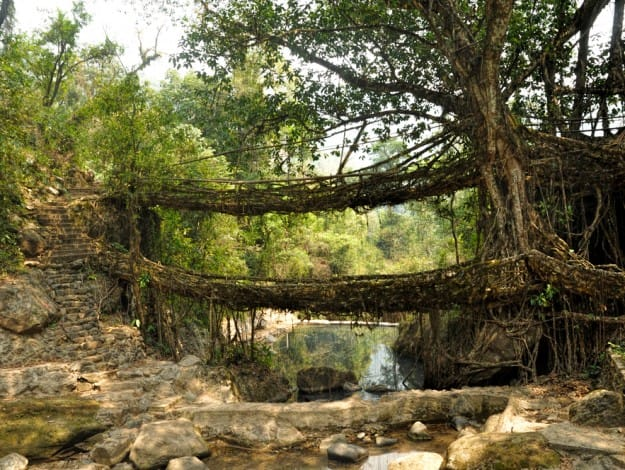 roots-bridges-625x470