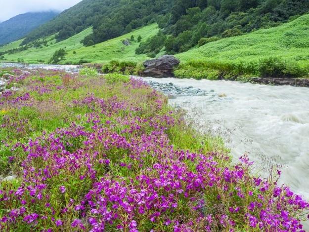 shutterstock_287052002 valley of flowers