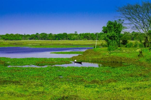Janmashtami Assam