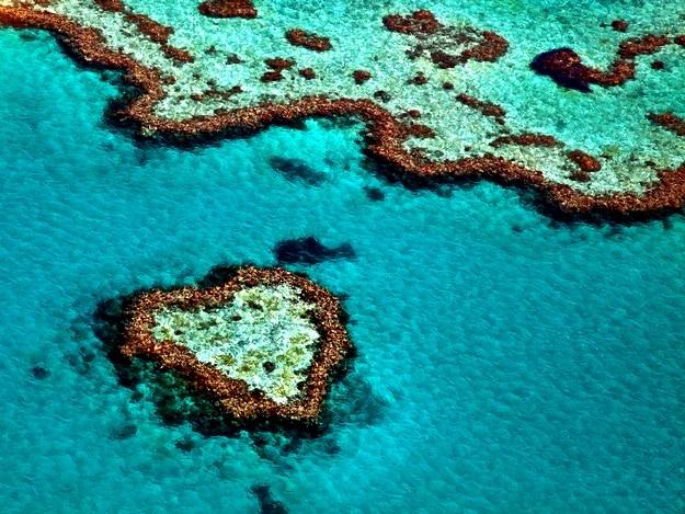 great-barrier-reef1