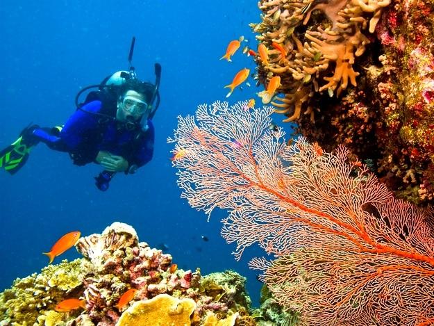 great-barrier-reef2