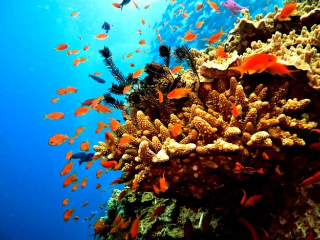 great-barrier-reef4