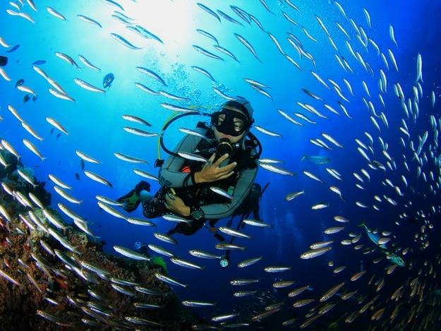 Diving in Great Barrier Reef