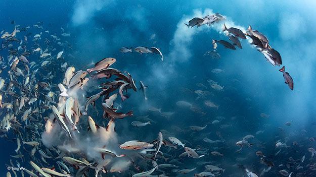 ©-Tony-Wu_Wildlife-Photographer-of-the-Year_-Under-Water-winner