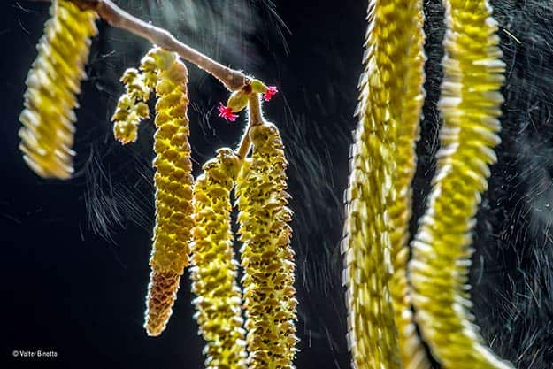 ©-Valter-Binotto_Wildlife-Photographer-of-the-Year_-Plants-winner