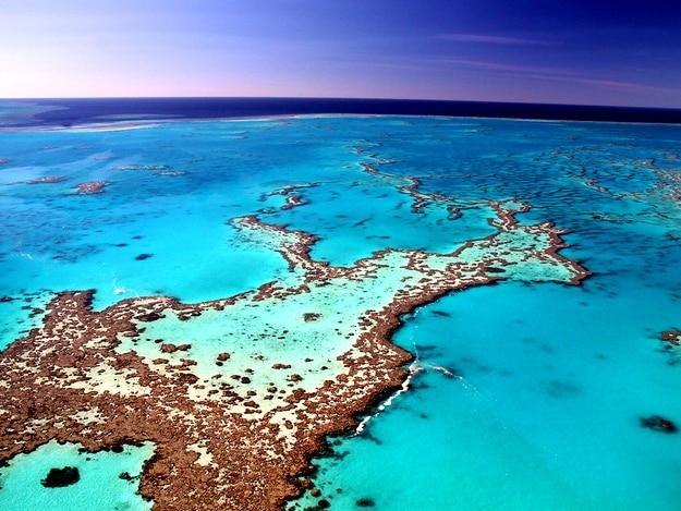 great-barrier-reef3