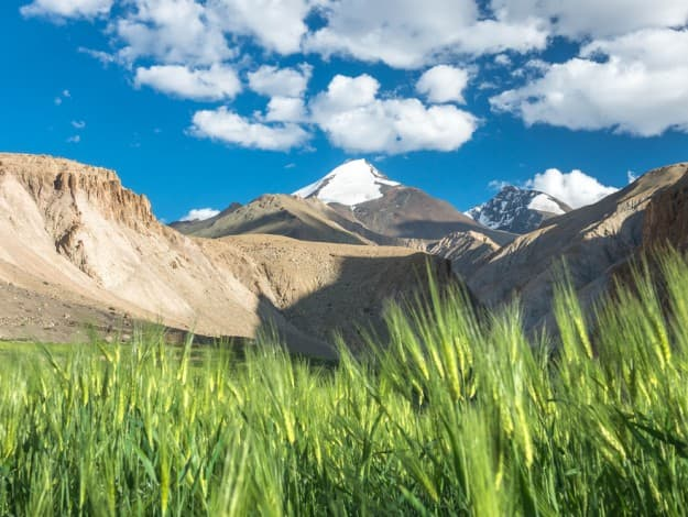 Markha valley