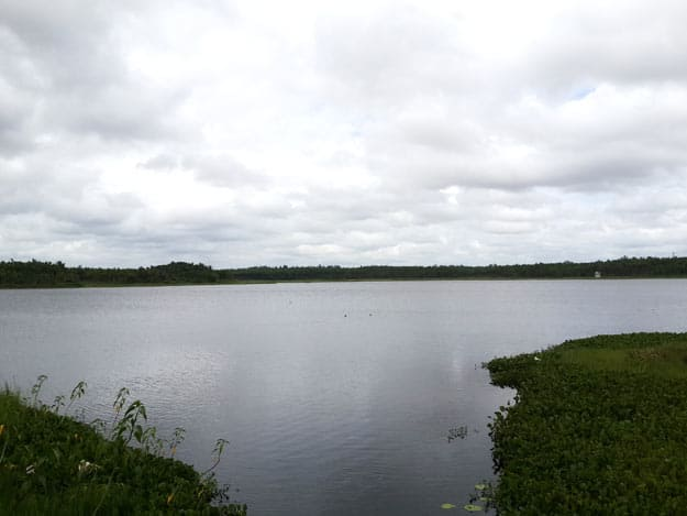 Photograph Courtesy: ShveataMishra/Wikimedia Commons