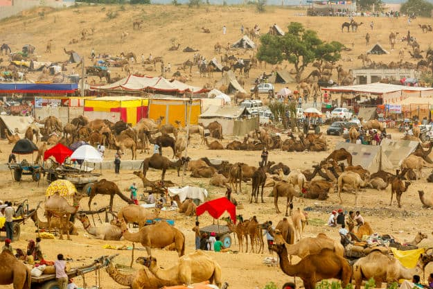 Pushkar Fair 2017 is Underway and it is Awesome as Always!