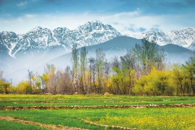 Srinagar winter