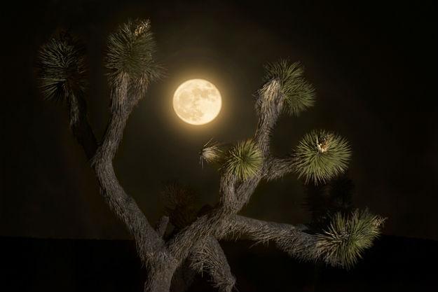 Photograph Courtesy: Joshua Tree National Park/Creative Commons