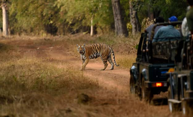 5 interesting facts about Naya Raipur's Jungle safari