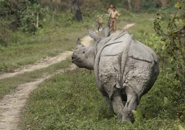 Kaziranga National Park hit by Massive Floods: When to Visit Kaziranga National Park