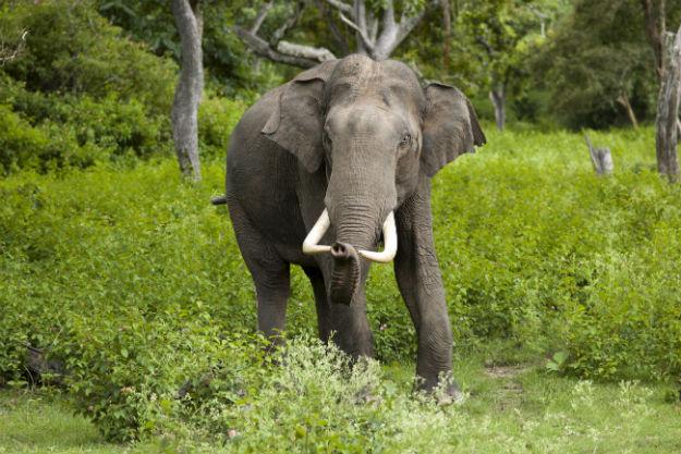 Photograph Courtesy: Yathin S Krishnappa/Creative Commons