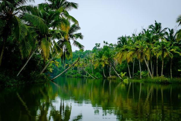 Kerala-Poovar