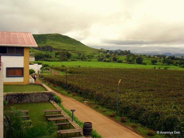 Sula Vineyards, Photograph Courtesy: Annanya Deb/Creative Commons