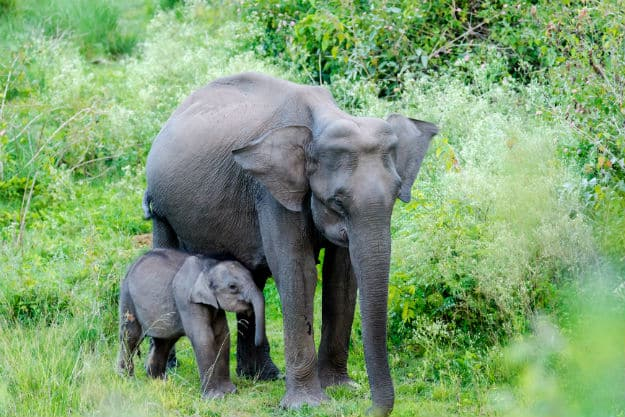 Elephants at Bandipur