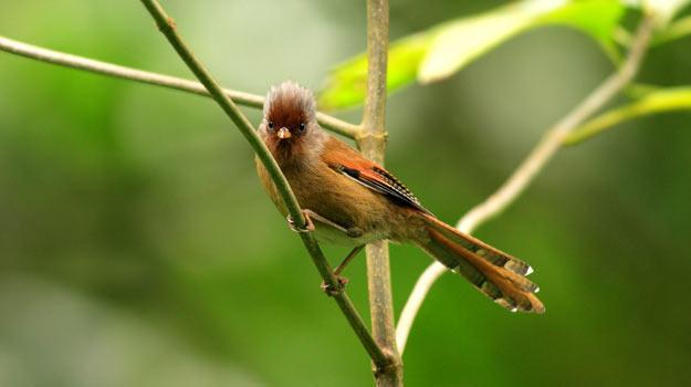 Namdapha-Main