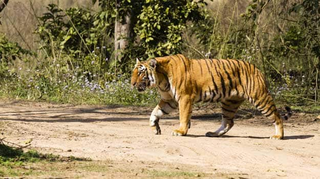 How to Reach Panna National Park in Madhya Pradesh by Road, Train and Flight