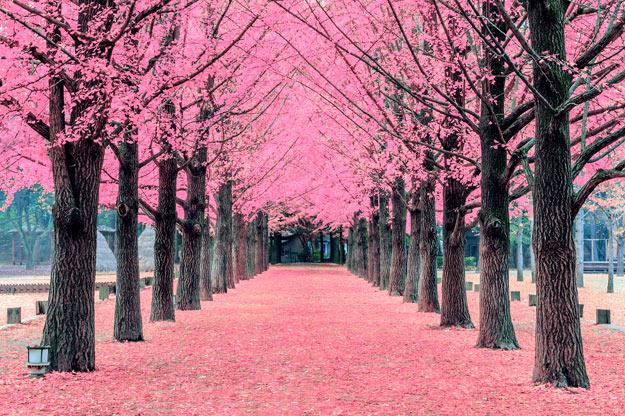 Pink Korea