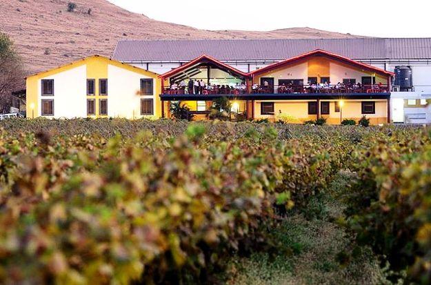 Sula Vineyards, Photograph Courtesy: Sulawines1234/Wikimedia Commons
