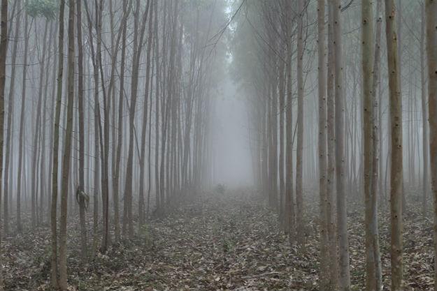 Lambasingi in Andhra Pradesh