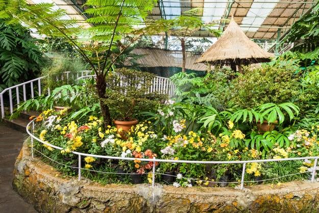 Flower Exhibition Centre in Gangtok, Sikkim