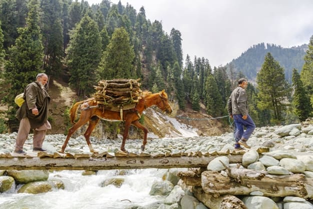 Gulmarg's nomadic men guide their ponies across a narrow bridge