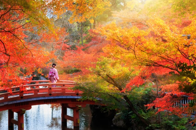 Wooden bridge in the autumn park, Kyoto