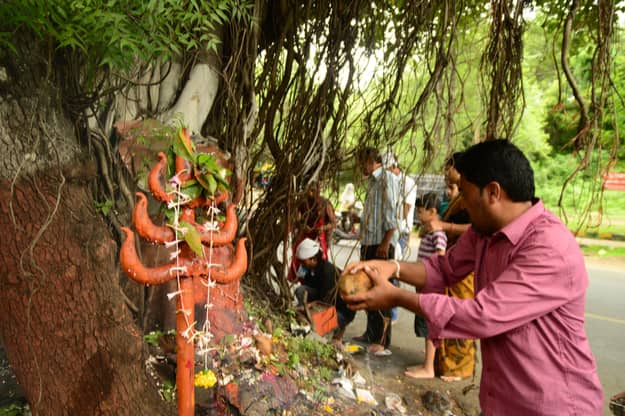 A tamer version of Nag Panchami celebrations in Nagpur, Maharashtra