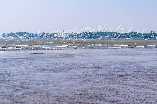 View at Akshi beach, Alibag