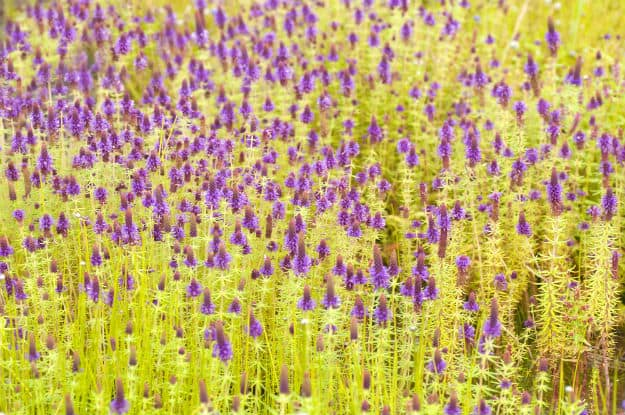 how to go to valley of flowers