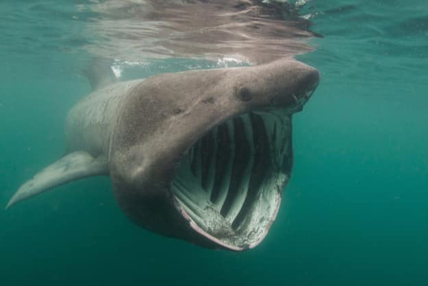 These divers met the second-largest shark in the world ...