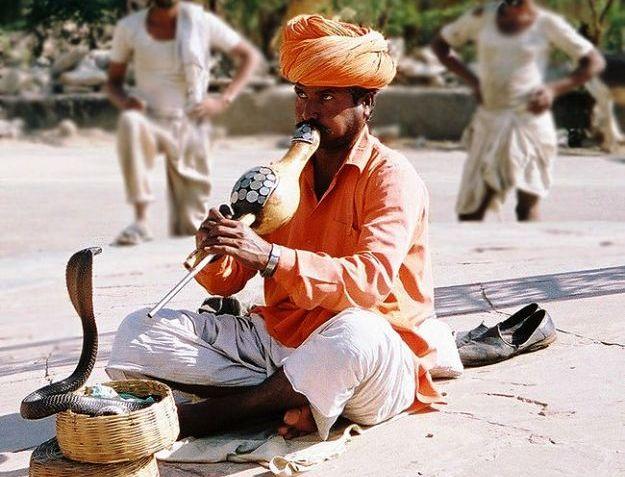 A snake charmer in Jaipur, Photograph courtesy: Sdiwakar/Wikimedia Commons