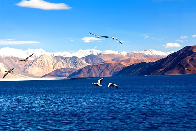 Pangong Tso in Ladakh: Beautiful pictures and interesting facts about Pangong Tso that'll make you fall in love with Kashmir's lakes