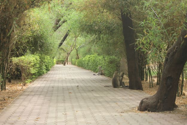 Indroda Nature Park in Gandhinagar