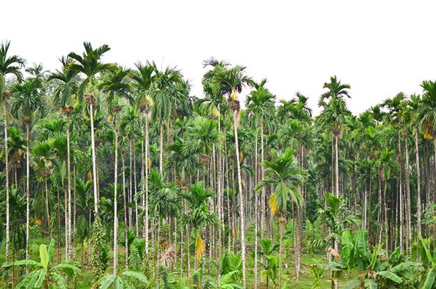 Mangalore 7