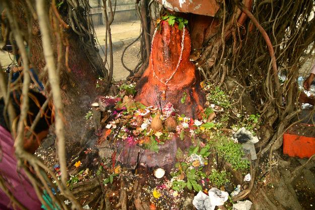 Nag Panchami Nagpur 2