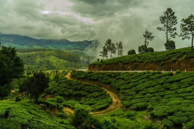 Munnar Tea Plantation during Monsoon