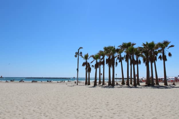 Palm trees on the Banana beach in Tel Aviv