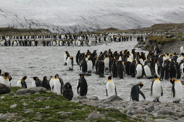 Antarctica penguins 3