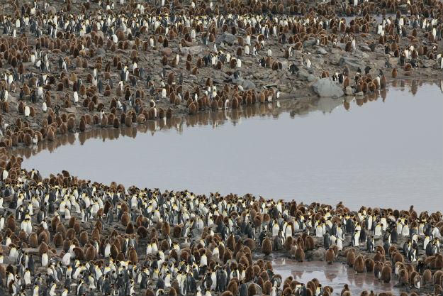 Cute penguins in Antarctica