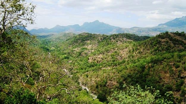 Chinnar Wildlife Sanctuary, Photograph courtesy: Jaseem Hamza/Wikimedia Commons