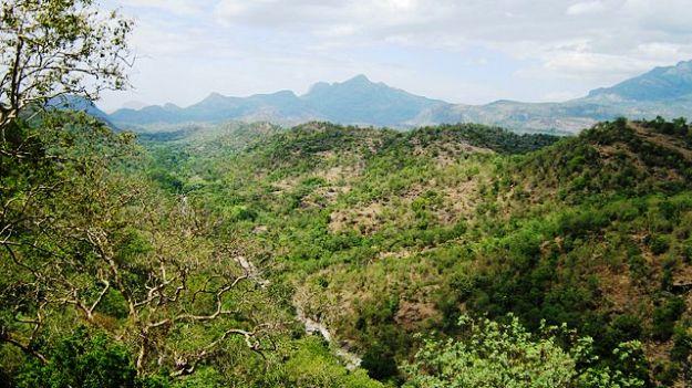 Chinnar Wildlife Sanctuary, Photograph courtesy: Jaseem Hamza/Wikimedia Commons
