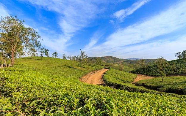 Beautiful Vagamon in Kerala