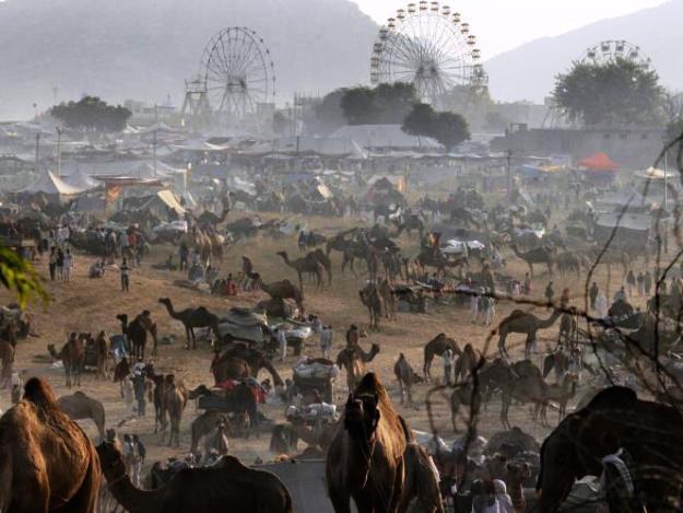 A scene of Sonepur Cattle Fair, Photograph courtesy: Wikimedia Commons
