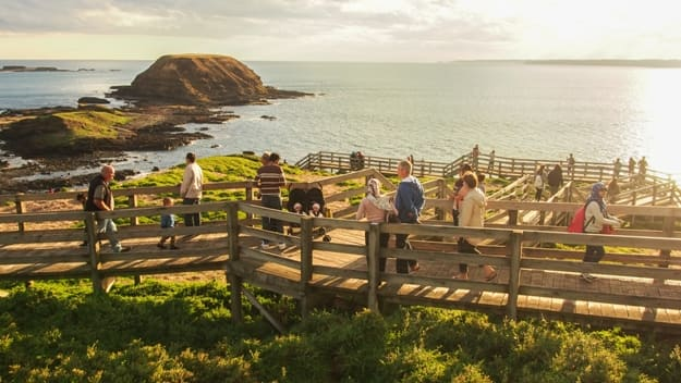 Beautiful view of Philip island with a unidentfiled group of people walking on wood board to enjoy sunset and looking for penguins, Victoria, Australia